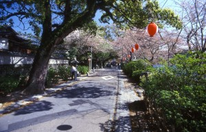 Hanami in Kyoto